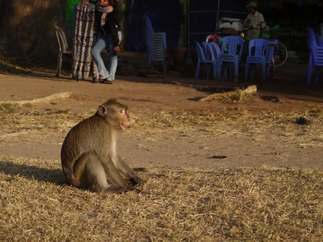 アンコールワットの猿